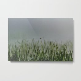 Old bullrush on a pond in the mist. Metal Print