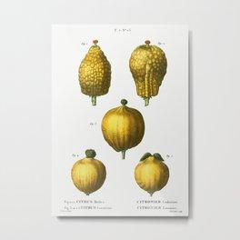 1, 2. Citron, Citrus medica 3, 4, 5. Lemon, Citrus limonium from Traité des Arbres et Arbustes que l Metal Print