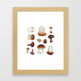 mushroom collection Framed Art Print