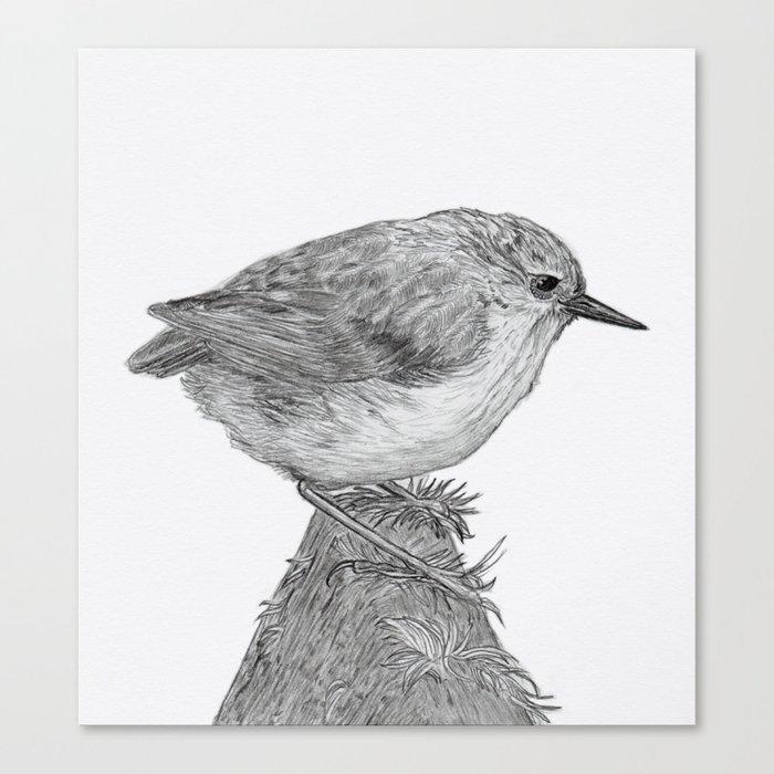 Rifleman - New Zealand Native Bird Canvas Print