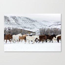 Carol Highsmith - Wild Horses Canvas Print