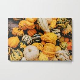 Autumn Squash Metal Print