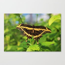 To Love Somebody Canvas Print