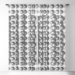 Atoms 2 Sheer Curtain
