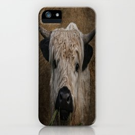White High Park Cattle Chewing Grass iPhone Case