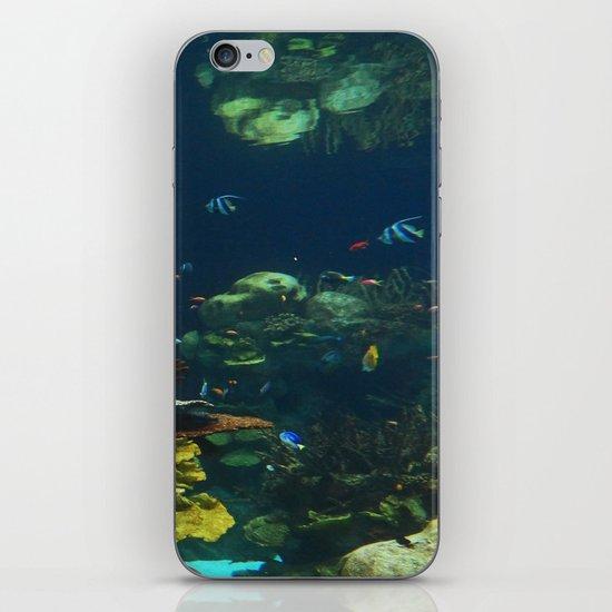 In  the Aquarium iPhone & iPod Skin