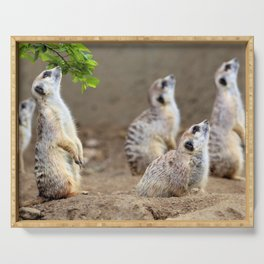 Meerkats on the Lookout by Reay of Light Serving Tray