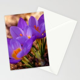 Concept nature : Crocus etruscus in silva Stationery Cards