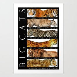 Big Cats of the World Art Print
