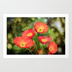Little red poppies Art Print