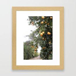 Ojai Oranges Framed Art Print