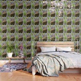 Young Green Heron Wallpaper