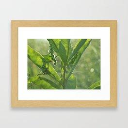 Golden Hour Natural Beauty Framed Art Print
