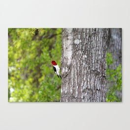 Red-headed Woodpecker Canvas Print