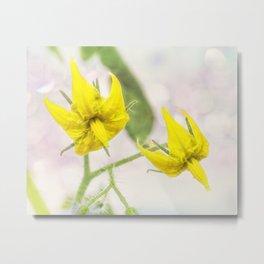 Flores de tomate. Metal Print