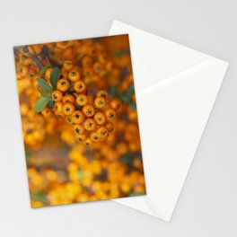Fall berries in orange Stationery Cards