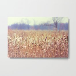 A Glow in the Cattails  Metal Print
