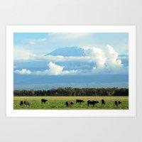 kilimanjaro and the water buffalo herd Art Print