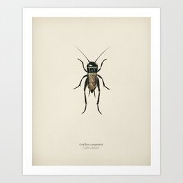 Field crickets (Gryllus campestris) illustrated by Charles Dessalines D' Orbigny (1806-1876) 2 Art Print