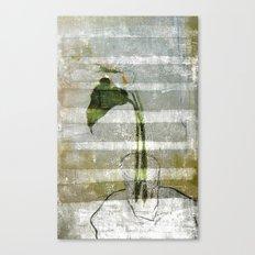 the arum Canvas Print