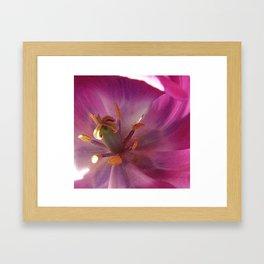 Pretty Pink Framed Art Print