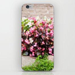 pink Begonia semperflorens clumps iPhone Skin