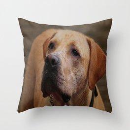 Golden Labrador Throw Pillow