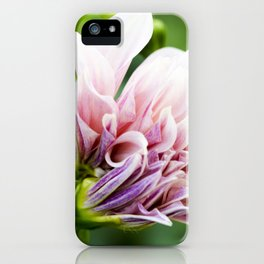 Cafe Au Lait Dahlia in Bloom iPhone Case