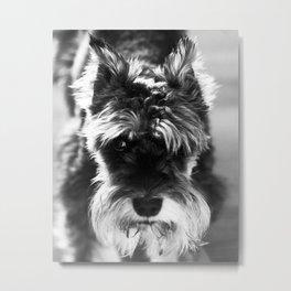 Black & White Minature Dog Metal Print