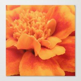 Marigold Summer Canvas Print