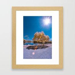 Lens Flare Tree Framed Art Print