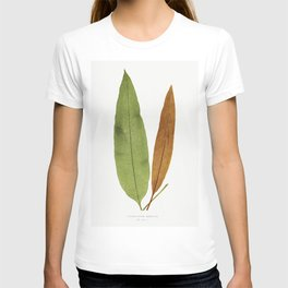 Acrostichum Brevipes from Ferns British and Exotic (1856-1860) by Edward Joseph Lowe T-shirt