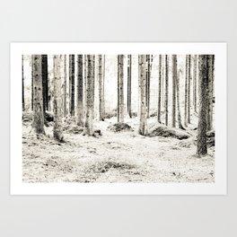 Tree Trunks II Art Print