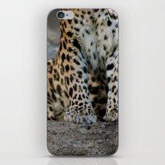 Paws iPhone & iPod Skin