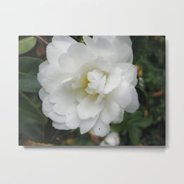 Cherakee Rose Metal Print