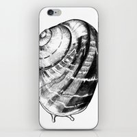 snail iPhone & iPod Skins featuring Snail by MARIA BOZINA - PRINT