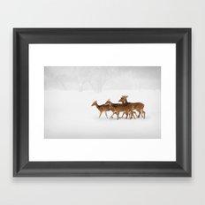 Snow Deer Framed Art Print