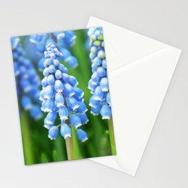 Blue Muscari Close Up Stationery Cards
