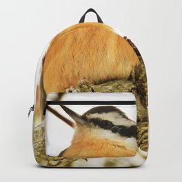 Curious Nuthatch Backpack