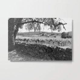 Napa Vineyard Metal Print