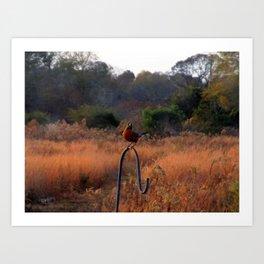 Robin Perched on Bird Feeder Stand Art Print