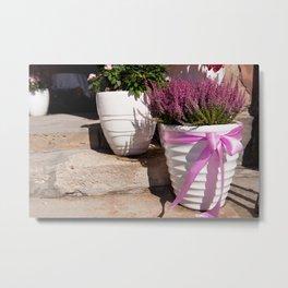 Blooming Calluna vulgaris or heather Metal Print