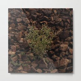 Green plant on the gray stones, grow on the stones Metal Print