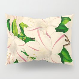 Azalea Alba Magnifica (Rhododendron indica) Vintage Botanical Floral Scientific Illustration Pillow Sham
