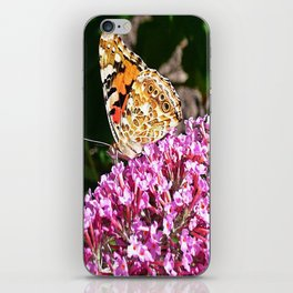 Painted Lady Butterfly iPhone Skin