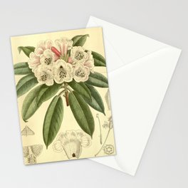Rhododendron monosematum 1916 Stationery Cards