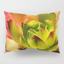 Succulent Series 8 Pillow Sham
