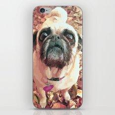 Pug Love ~ In Delilah's Eyes iPhone Skin