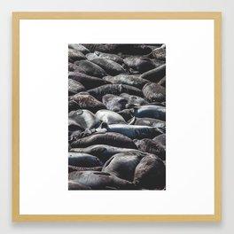 Seal Beach Framed Art Print