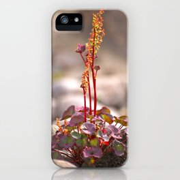 Wildflower between stones scandi landscape iPhone Case